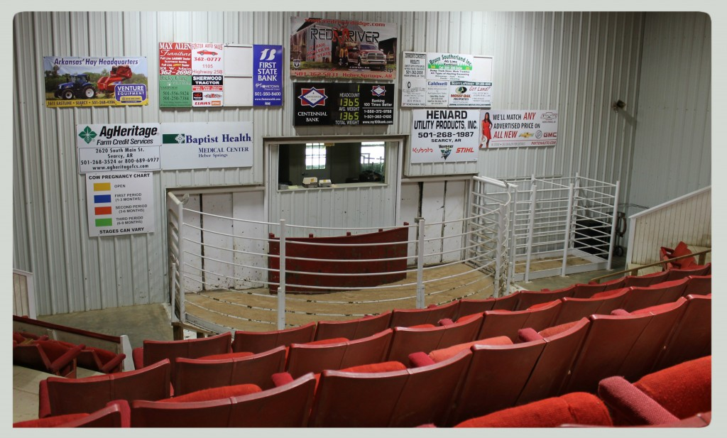 Cleburne County Livestock Auction sale ring